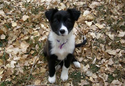 Puppy Training in Colorado