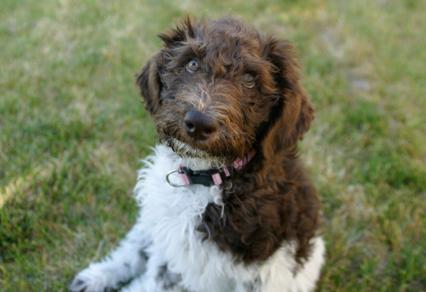 Dog Training Services in Boulder