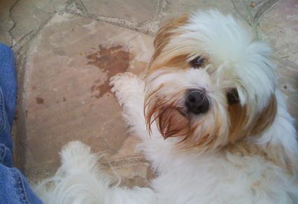 Dog Training Longmont