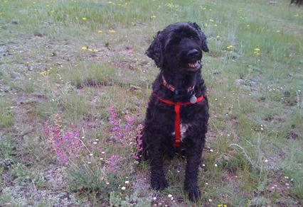 Dog Training Classes in Longmont, CO