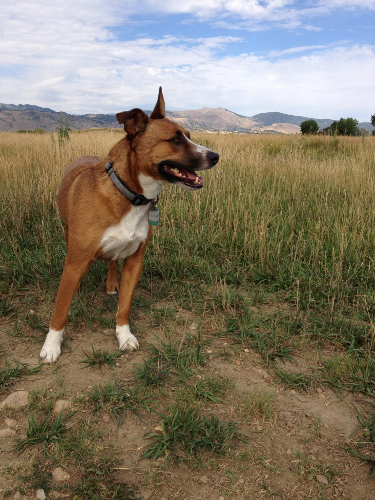 dog training in boulder county